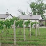 Southern Ohio Wine Renaissance