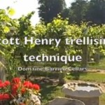 Scott Henry Trellis Technique Demo at Domaine Berrien Cellars