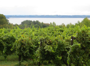 Ciccone Vineyard and Winery, Suttons Bay,  Michigan