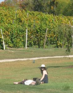 Round Barn Winery,  Baroda, Michigan