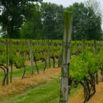 Wine Makers Love Southern Illinois Grape Growers