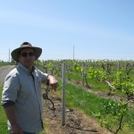 Cab Sauv Ice Wine No Sweat for Lemon Creek Winery