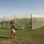 Acquaviva Winery's Multi-Row Bird Netting