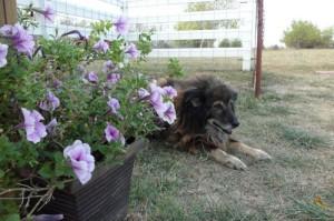Farm-Dog-Alfie,-aka-Bert