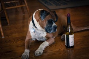 duke-with-wine