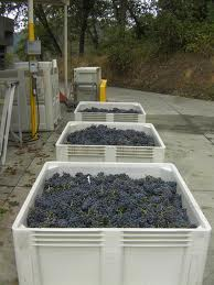 Microbins full of grapes (photo courtesy of Abacela Winery)
