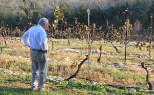 Hank Johnson built a rock glad vineyard at Chaumette Winery