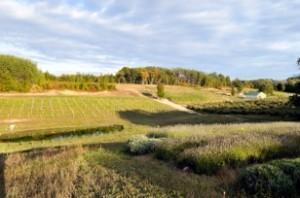 Good Neighbor Vineyards and Winery near Northport, Michigan