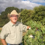 Grapevine Post-Harvest Nutrition Crucial to Next Year's Crop