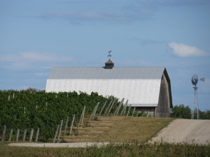 Some of the prime grape growing land in Michigan is in the center of the Leelanau Peninsula.