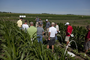 Dow herbicide training in Iowa places nervous young grape vines between rows of corn