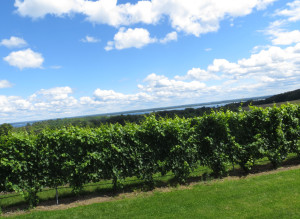 Brys Estate's Vineyard with Grand Traverse Bay in the background, Old Mission Peninsula Michigan