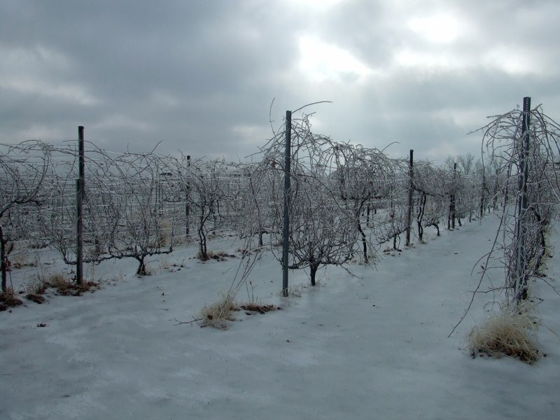 Winter at Stonhaus. Photo courtesy Stonehaus Farms Winery