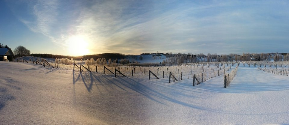 The L. Mawby vineyard on the Leelanau Peninsula