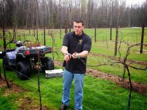 Matt Skaletski, Holy Grail Vineyard, prunes his Frontenac blanc. Photo Courtesy Matt S.
