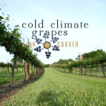 Cold Hardy Grape Documentary Debuts