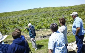Viewing the vines at Feather River Vineyards who will be at this year's Omaha Crush (Photo courtesy Feather River)