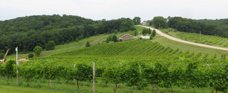 Park Farm Winery's 11 acre vineyard in Bankston, Iowa as seen from the entrance to the tasting room.