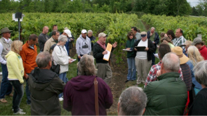 Photo credit: Chrislyn Particka, Cornell University. Northern Grapes Project Director Dr. Timothy Martinson speaks about the training system trials during a field day at Coyote Moon Vineyards in Clayton, NY.