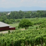 Virginia Shows the Potential of Midwest Wine