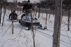 Fun in March at Shelburne Vineyard (photo courtesy winery)