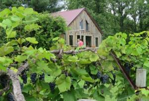 Hickory Ridge Winery in Southern Illinois is an example of a Midwest Winery that closely associates grape production with the tasting room experience.