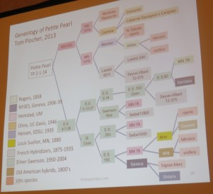 This slide from Plocher's presentation is proof of the complexity of breeding wine grapes.