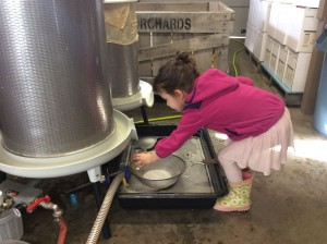 A ballerina, the winemaker's granddaughter, checks for quality assurance in pressed apple juice destined for Mount Zion Orchard's Duet, an apple/aronia blend.