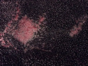 As it ferments, aronia must will be punched down twice a day at Mount Orchard. Credit: Mount Zion Orchard