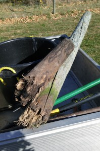 """Snapped, rotting 6"""" round wooden posts at Round Lake Winery"""