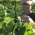 Making Marquette: In the Vineyard